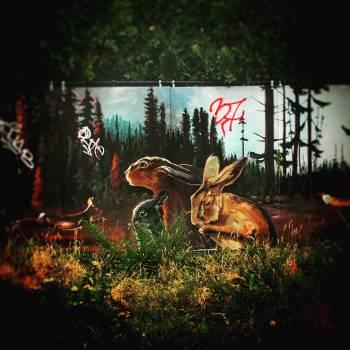 Graffito Buck Decoration Free Photo