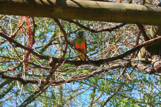 Parrot Bird Macaw Free Photo