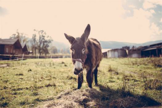 horse animal stable  Free Photo