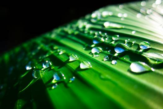 Drop Leaf Rain Free Photo