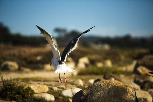 Gull Bird Seabird Free Photo