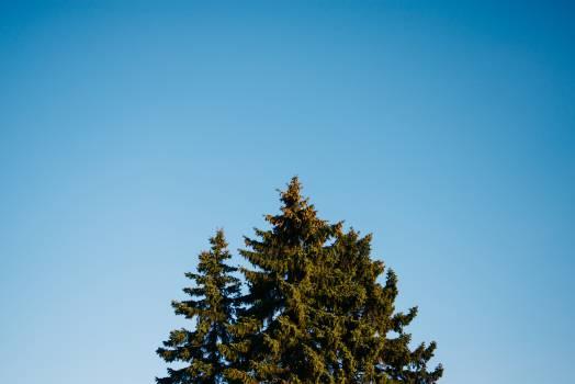 blue sky trees  Free Photo