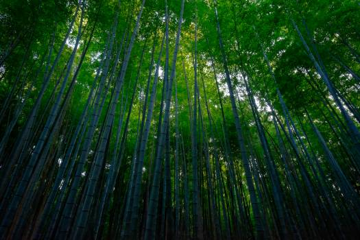 Bamboo Leaf Plant #201094