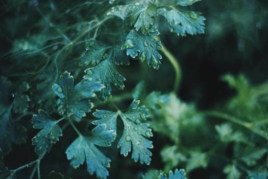rain drops leaves plants  #20147