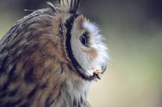owl bird  #20150