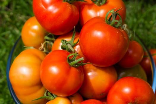 Cherry tomato Tomato Vegetable Free Photo