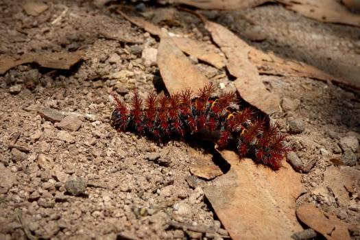 Arthropod Crayfish Invertebrate Free Photo