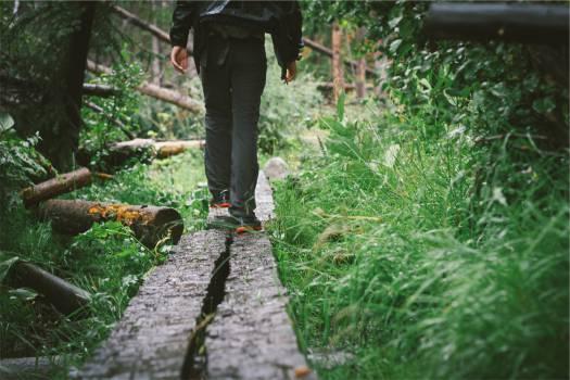 walking wood planks  Free Photo