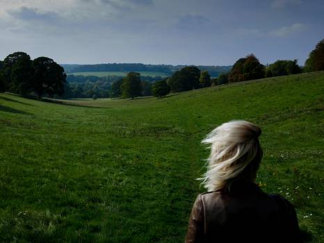 Grass Field Landscape #201929