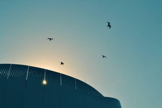 sunset birds flying  Free Photo