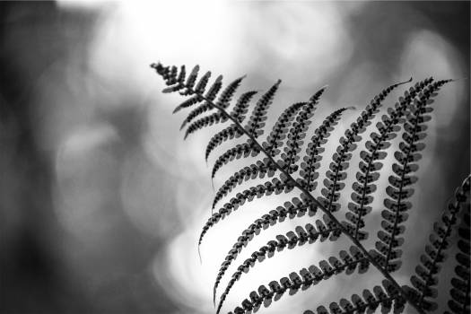 plant black and white  #20202