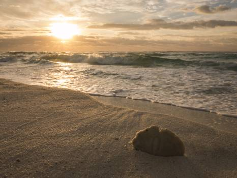 Beach Ocean Sand #202033