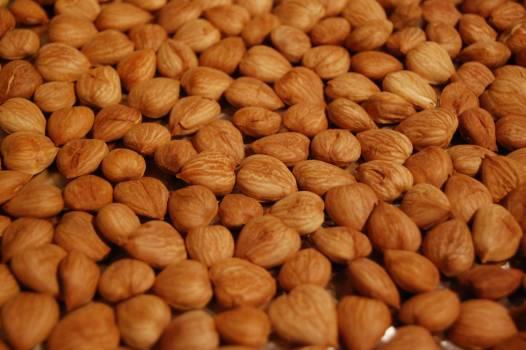 Hazelnut Edible nut Nut #202088