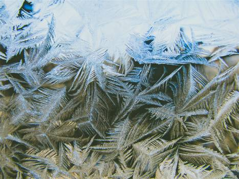 pine leaves frozen freezing  Free Photo