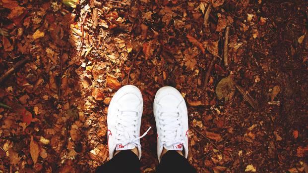 nike shoes sneakers  Free Photo
