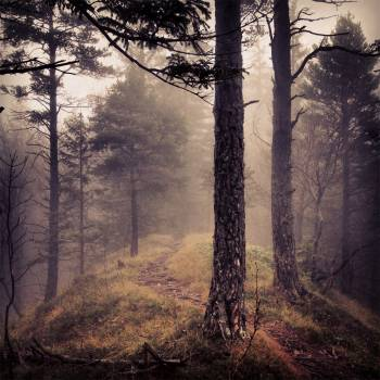 forest woods fog  Free Photo