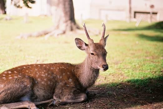 Deer Animal Wildlife #202742