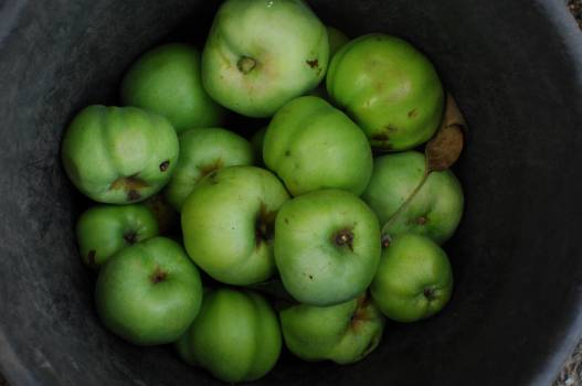 Granny smith Eating apple Apple #202868