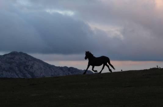 Camel Horse Ungulate Free Photo