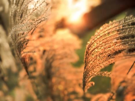 Tree Wheat Hay Free Photo