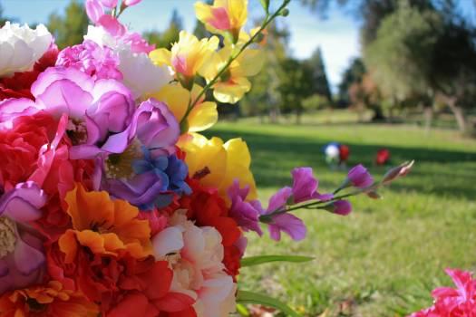 Flower Spring Plant #203101