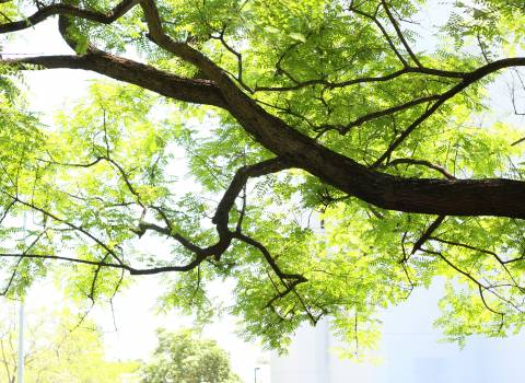 Tree Woody plant Forest Free Photo