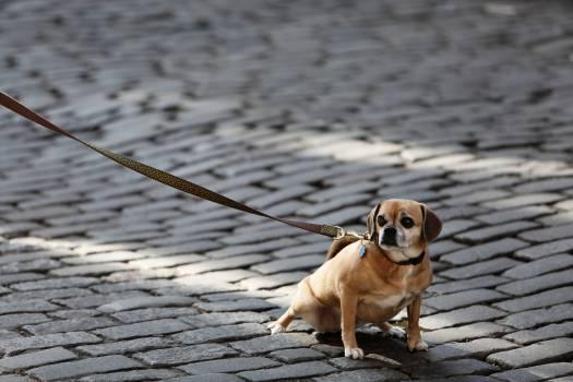 dog pet leash  #20357