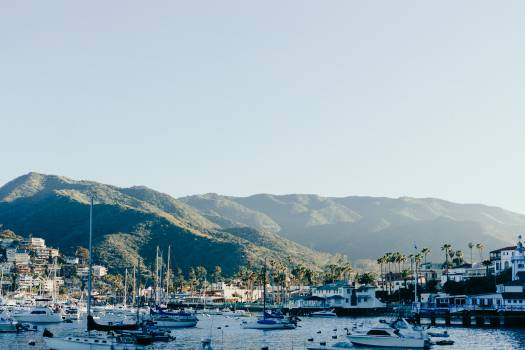 catalina island boats  Free Photo