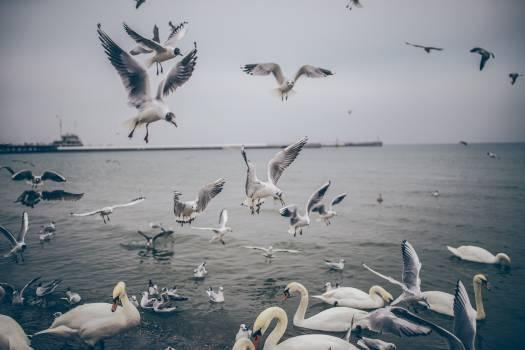 birds ducks seagulls  #20375