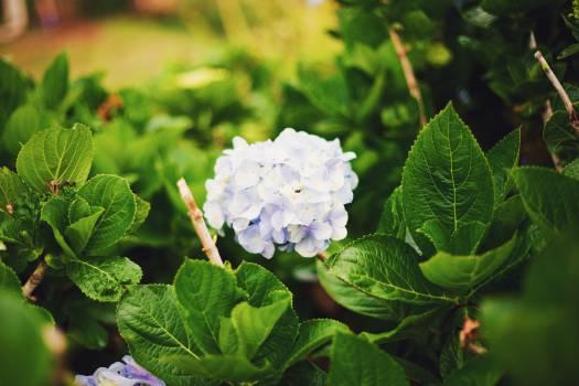 plants flowers green  #20383