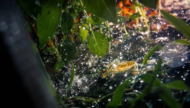 Spider web Drop Web Free Photo