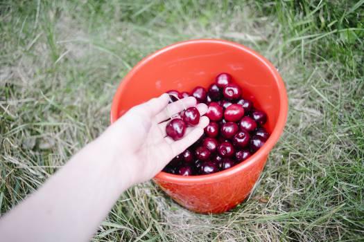 cherries bucket fruits  #20393