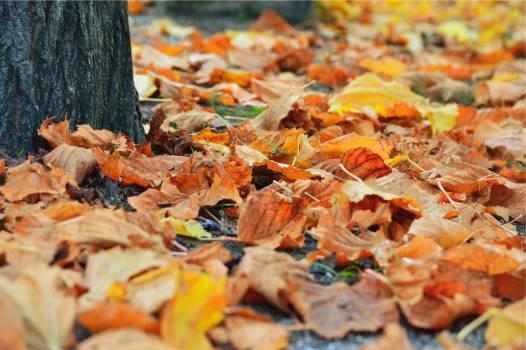 autumn fall leaves  Free Photo