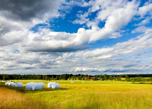 Farming Field Rural Free Photo