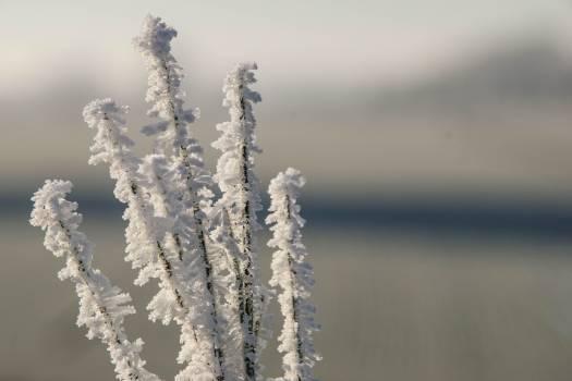 Ice Crystal Snow Free Photo