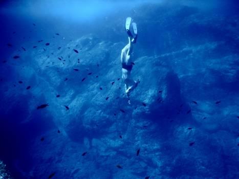 Fish Underwater Sea Free Photo