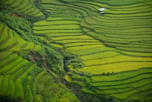 Tea Landscape Rural #204726