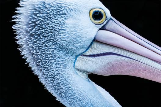 heron bird animal  #20478