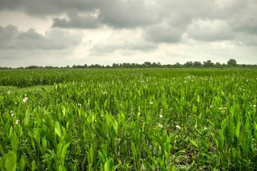 Wheat Field Farming Free Photo