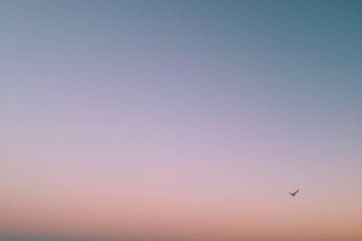 sunset bird sky  #20523