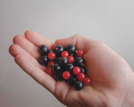 red blue berries  #20528