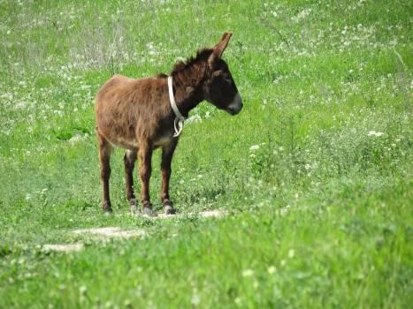 Calf Animal Farm Free Photo