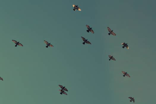 birds flying sky  Free Photo