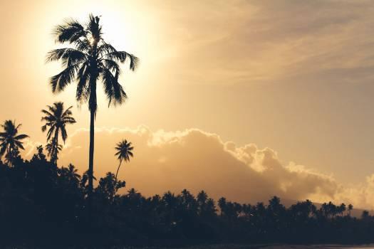 Sun Coconut Palm Free Photo