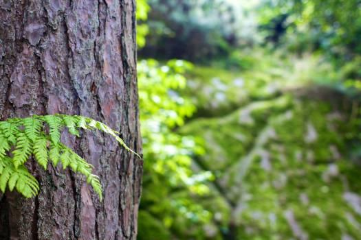 tree trunk bark leaves  #20573
