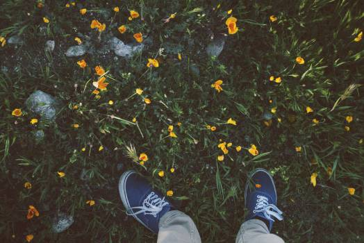 shoes sneakers grass  Free Photo