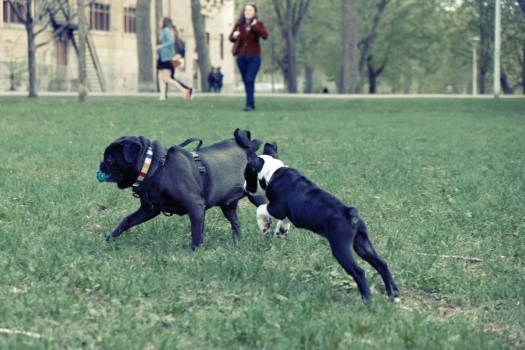 dogs playing park  Free Photo