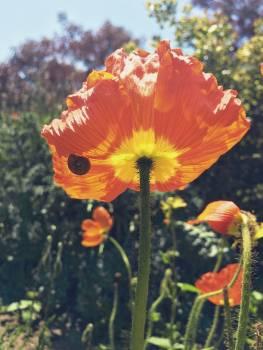 Orange Ornamental Flower Free Photo
