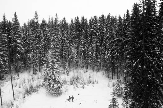 winter snow trees  #20670