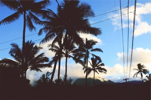 palm trees blue sky  Free Photo